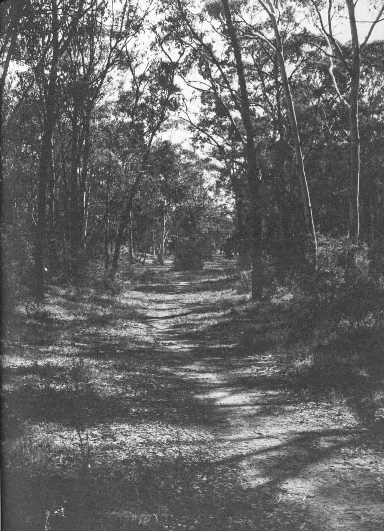 A view of the linear park fro Eucalyptus Rd