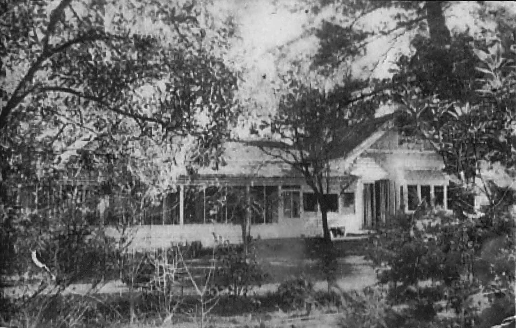 Pine Trees in 1952 - side view of the main house